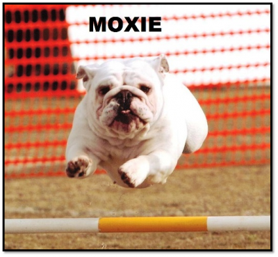 Moxie for Bulldogs webpage