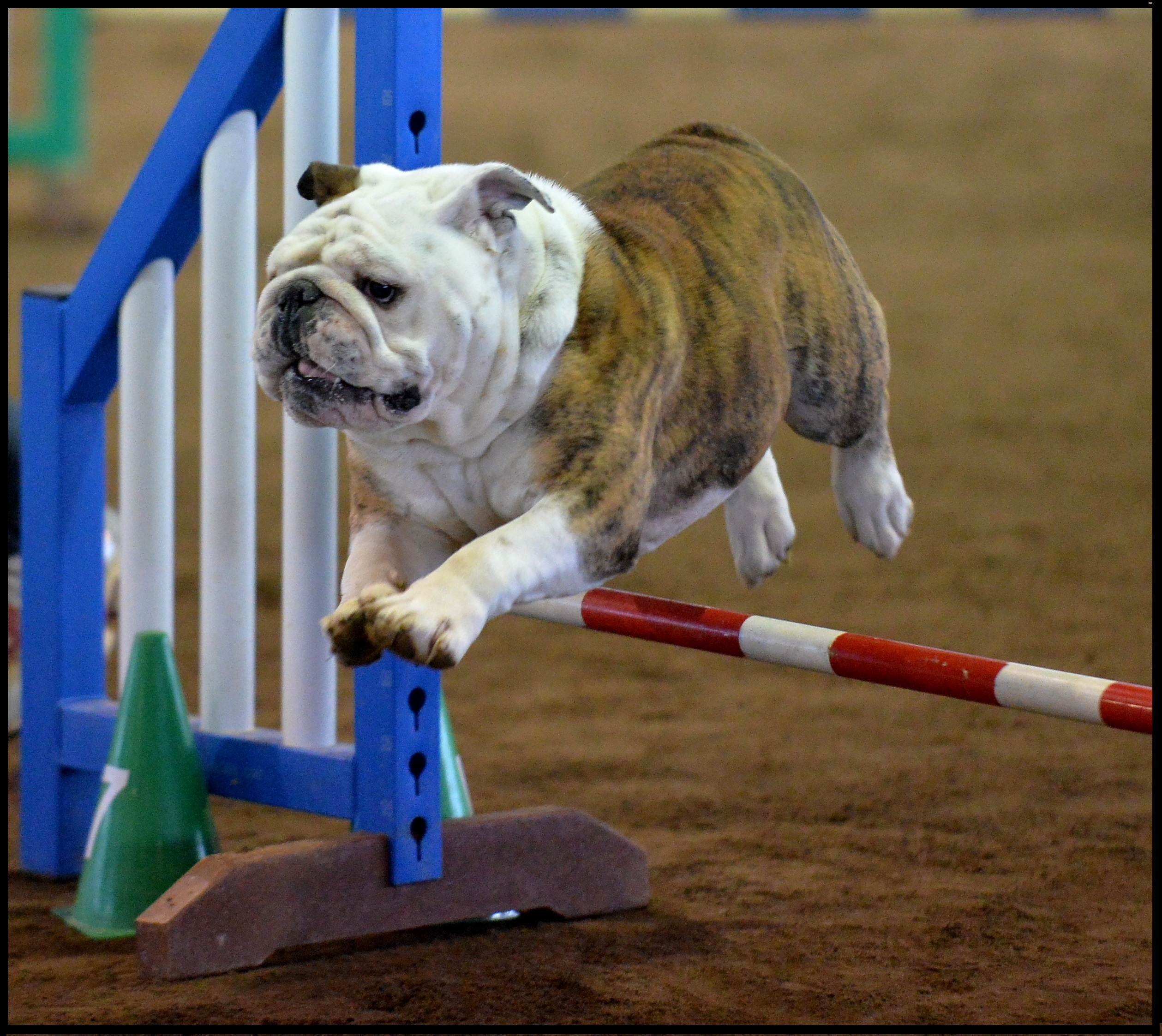 Jack in agility for web