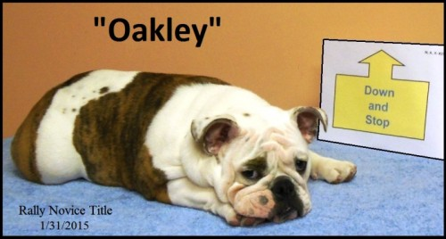 Oakley - RN photo for March 2015 Bulldogger titles page
