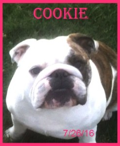 Cookie on 7.26.16